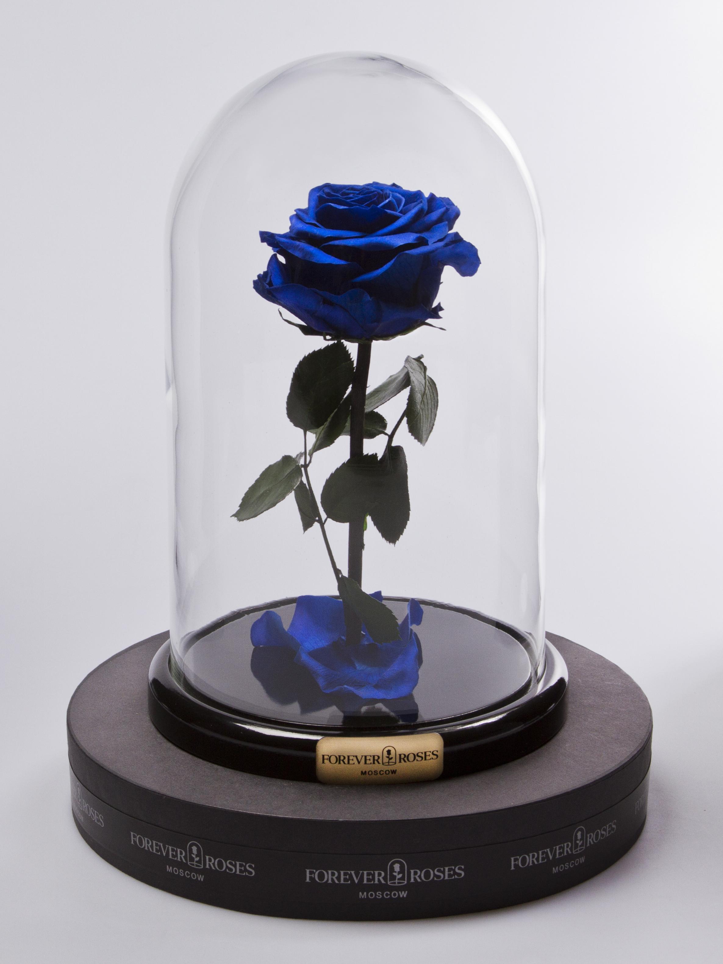 Роза мини Royal Blue<br>
