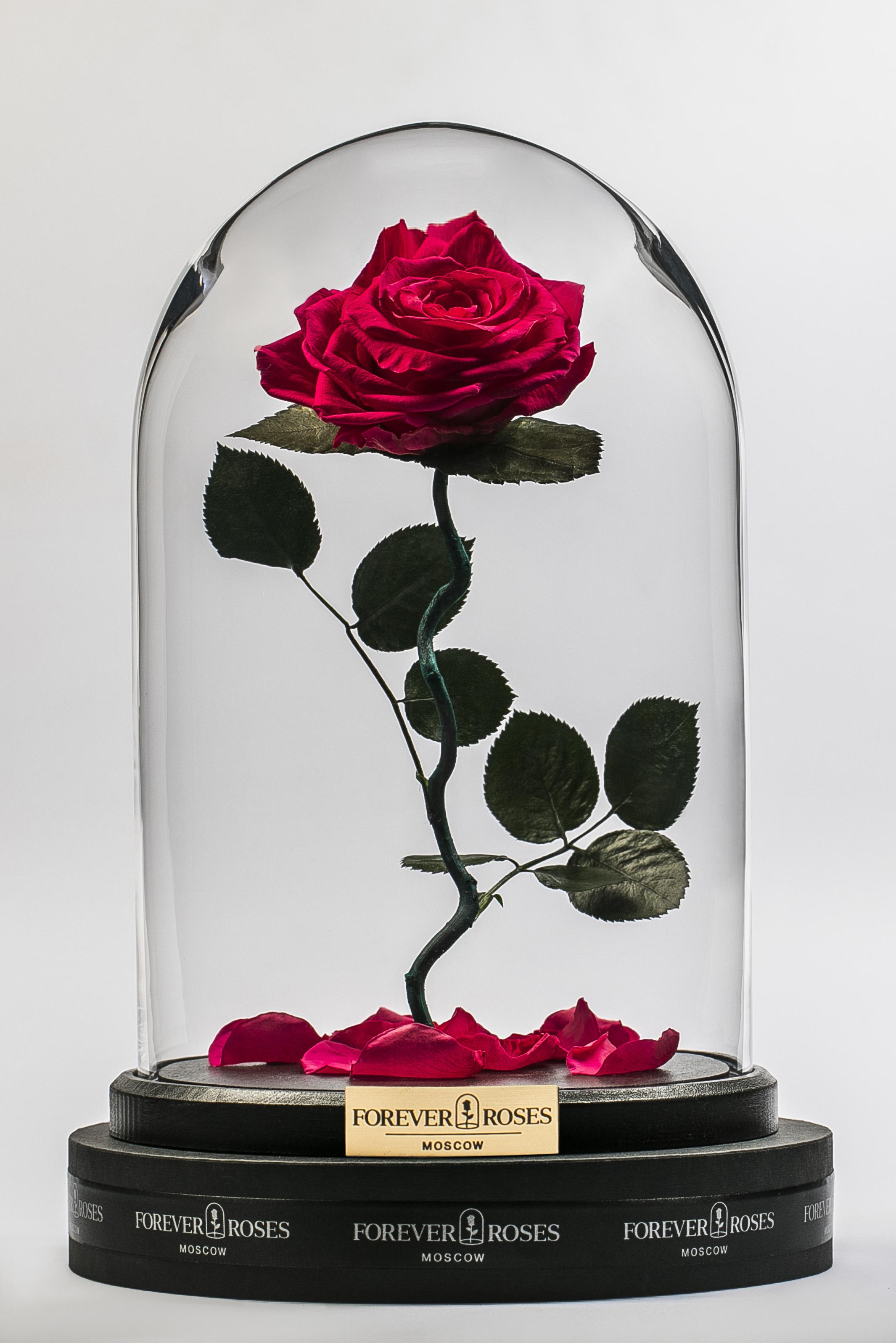 Роза на изогнутом стебле Magenta<br>