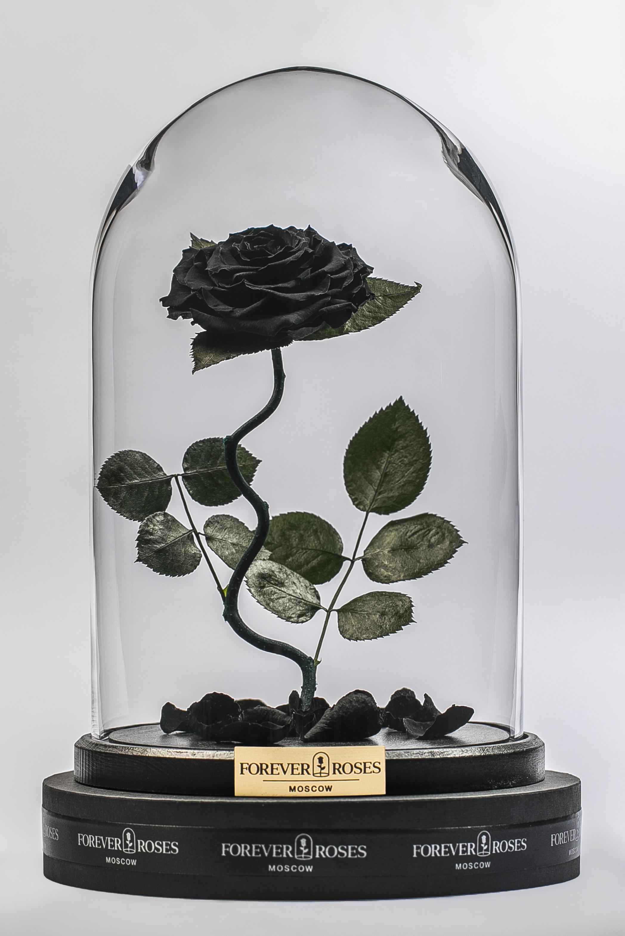 Роза на изогнутом стебле Noir<br>