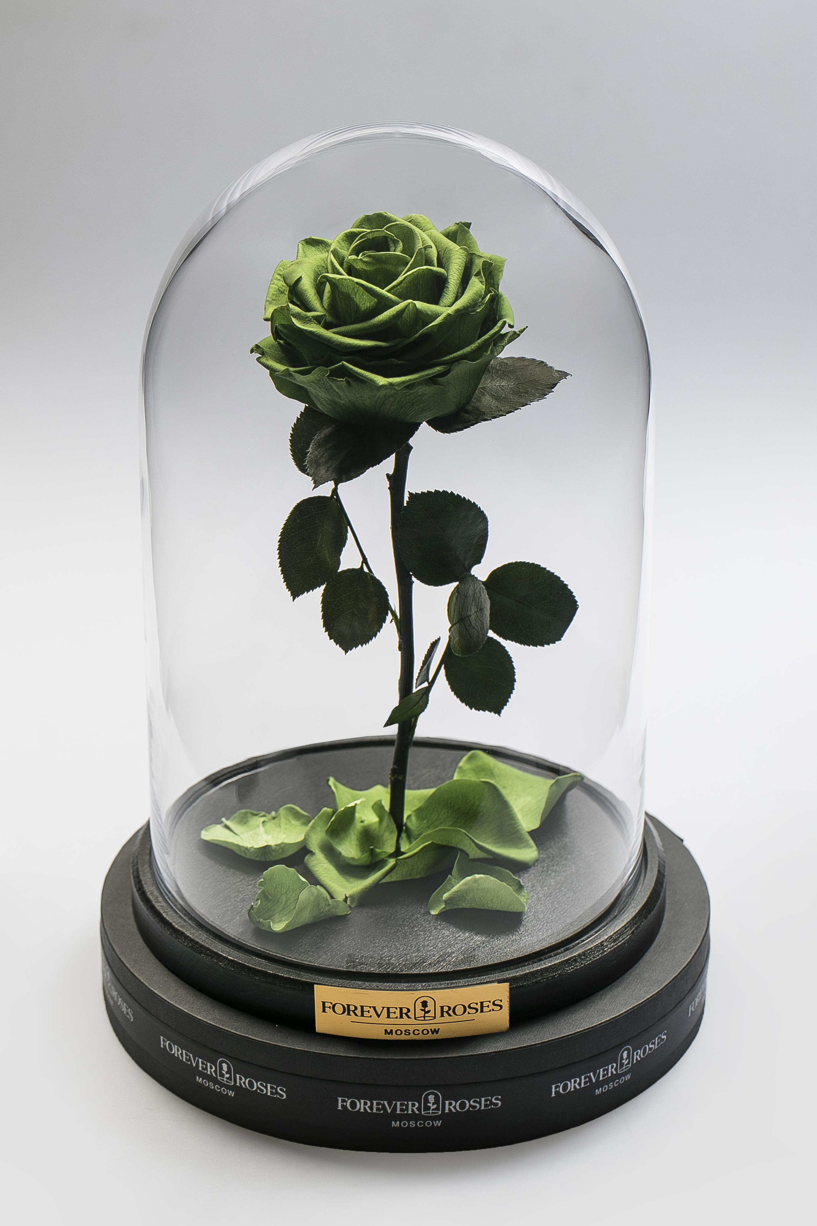 Роза на прямом стебле Green<br>