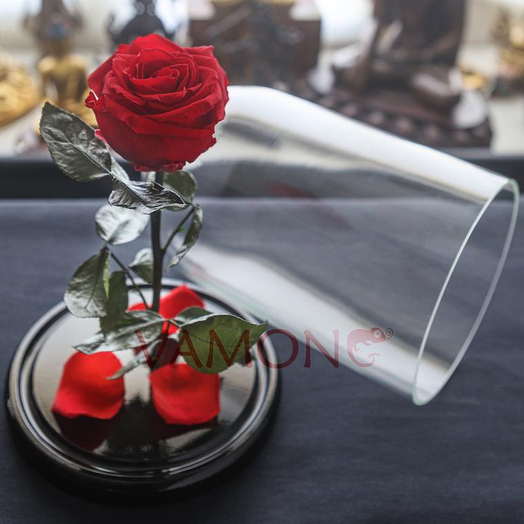 Роза красного цвета Premium<br>