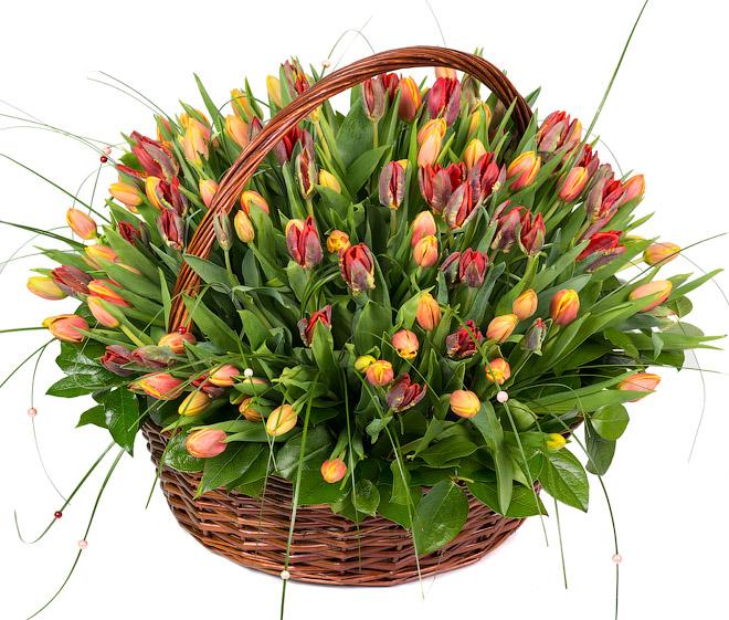 Корзина из 151 тюльпана<br>Ингредиенты: Тюльпан 151 шт, Берграсс, Оазис 3 шт, Корзина 1 шт;